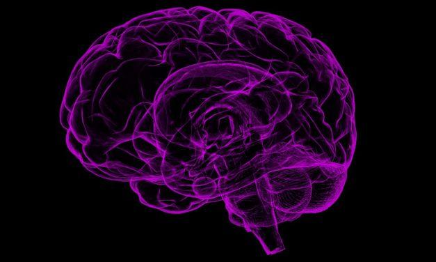Minnesträning syns i hjärnan