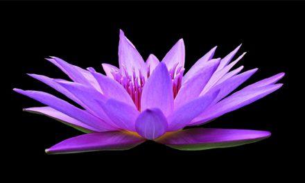 Meditation som mental styrketräning