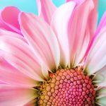 10 hälsotips för hjärnan i sommar